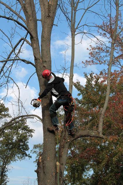ebranchage d arbres (1)