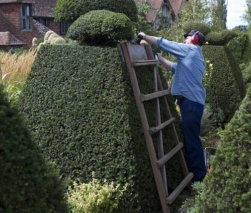 Elagueur entreprise de jardinage for Entreprise jardinage