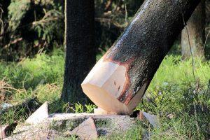 Abattage d arbres